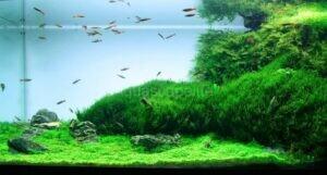 Jenis Jenis Tanaman Carpet Plants Yang Mudah Tumbuh Dan Mudah Perawatan Untuk Pemula