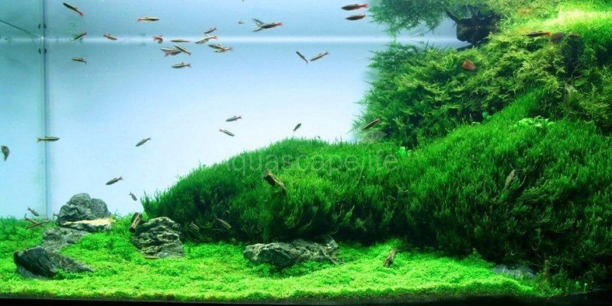 Jenis Jenis Tanaman Carpet Plants Yang Mudah Tumbuh Dan ...